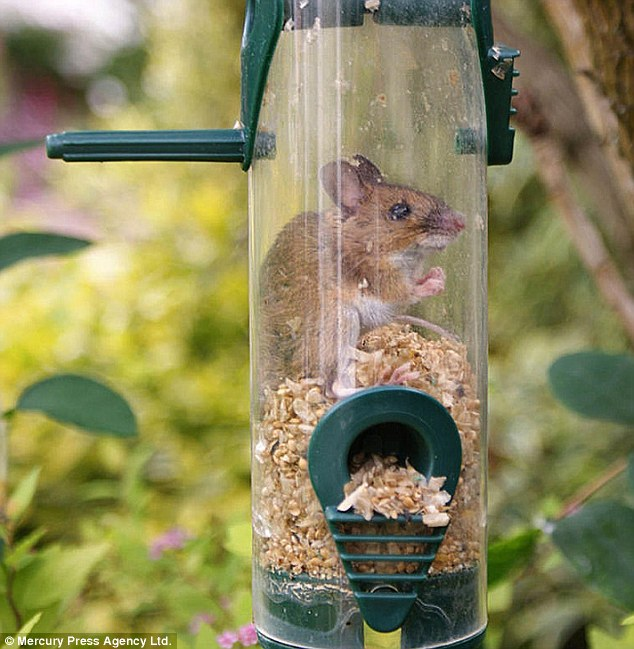 Keeping Rodents Out The Backyard Naturalist The